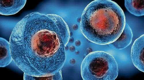 Image of cells.
