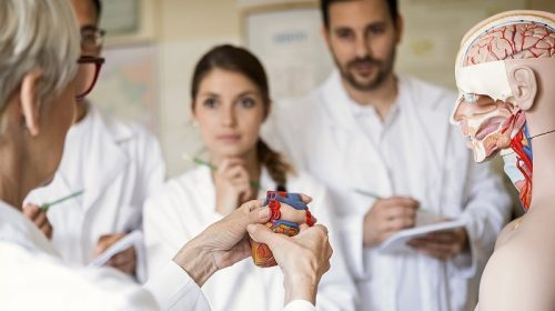 Student doctors looking at a model of a heart